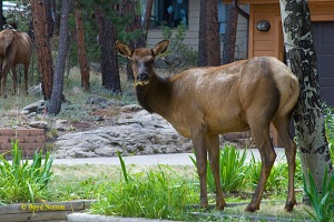 Part of elk gang casing neighborhood